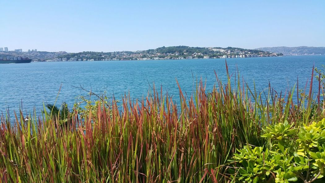 Bosphorus, Istanbul Nature Clear Sky No Filter, No Edit, Just Photography No People Beauty In Nature Uniqueness Water Outdoors Sky Day Sea Grass
