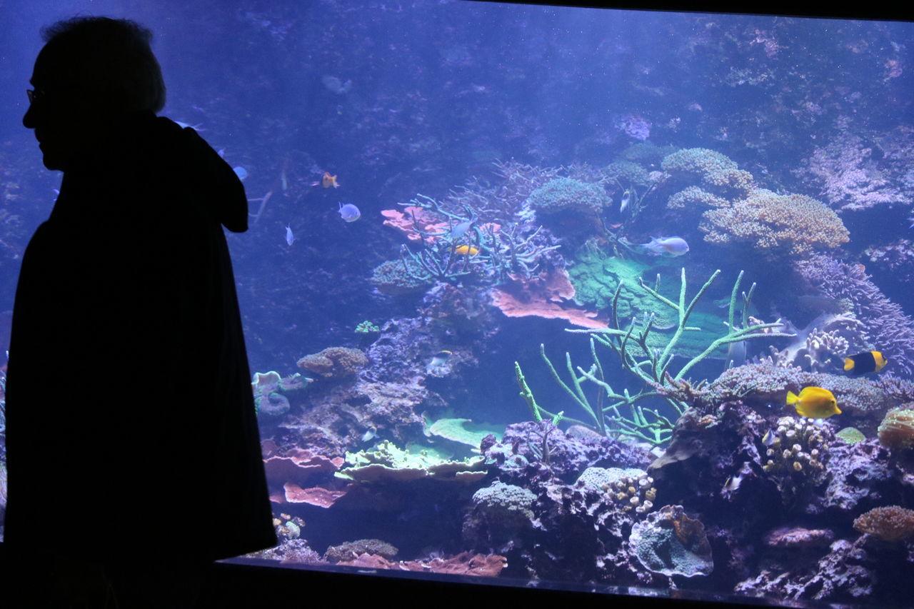 Amazing Aquarium Canada Canon Exclusive  Fish Sealife Toronto Water