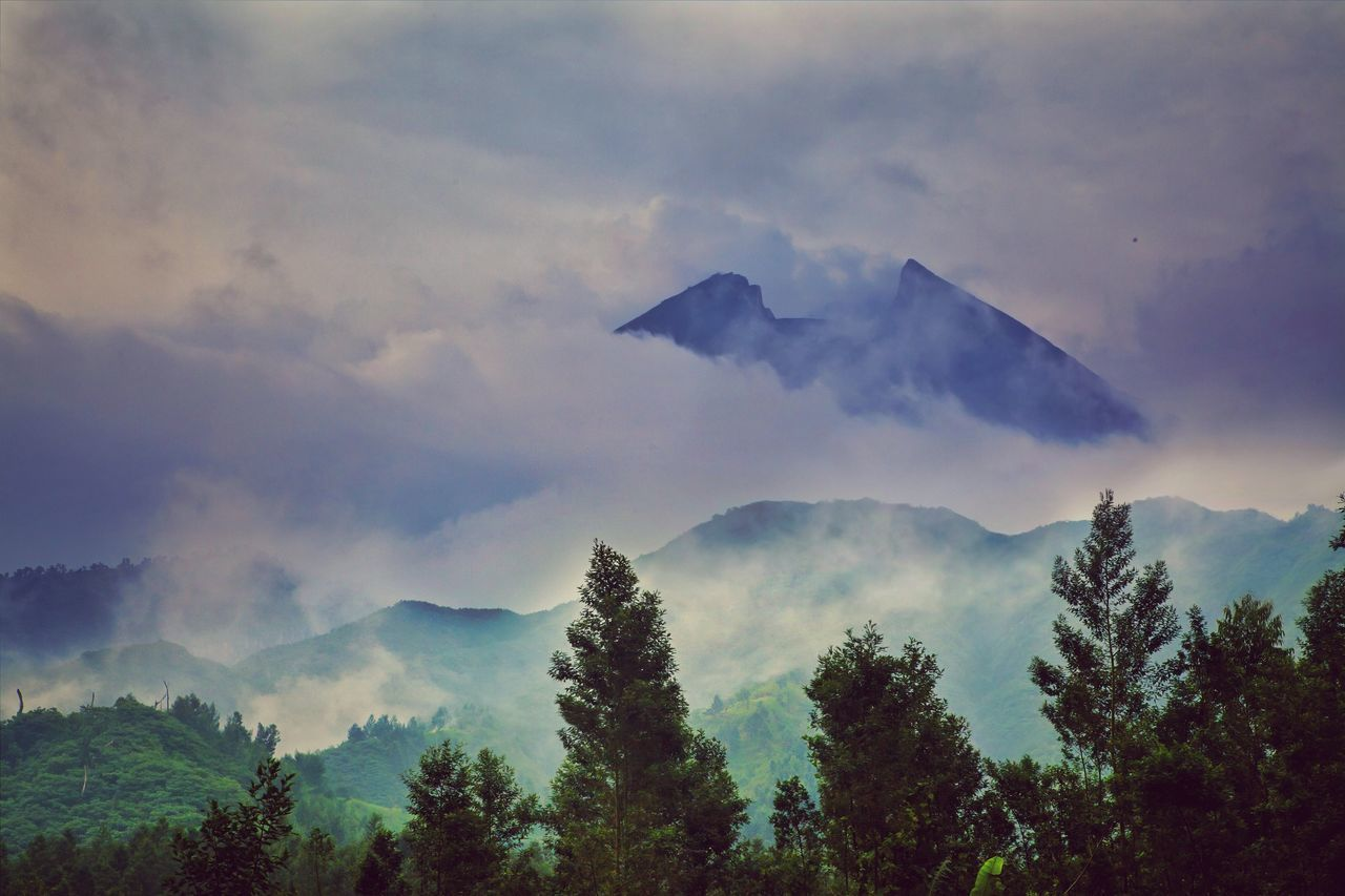 Landscape of Bromo National Park Tree Forest Nature Morning Outdoors Fog No People Mountain Beauty In Nature Scenics Bromo Landscape INDONESIA Dramatic Sky