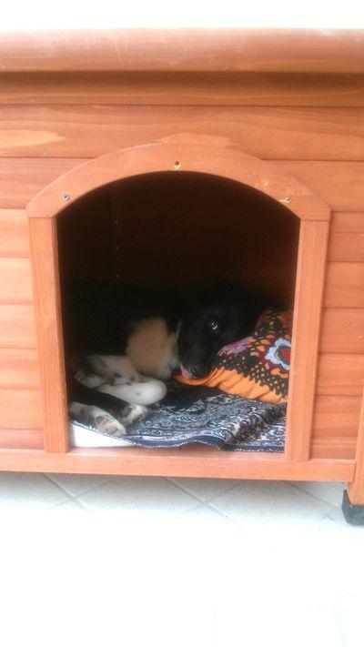 Border Collie Pets Cuccia No People Comfort Pisolo Pomeridiano Amico A Quattro Zampe First Eyeem Photo