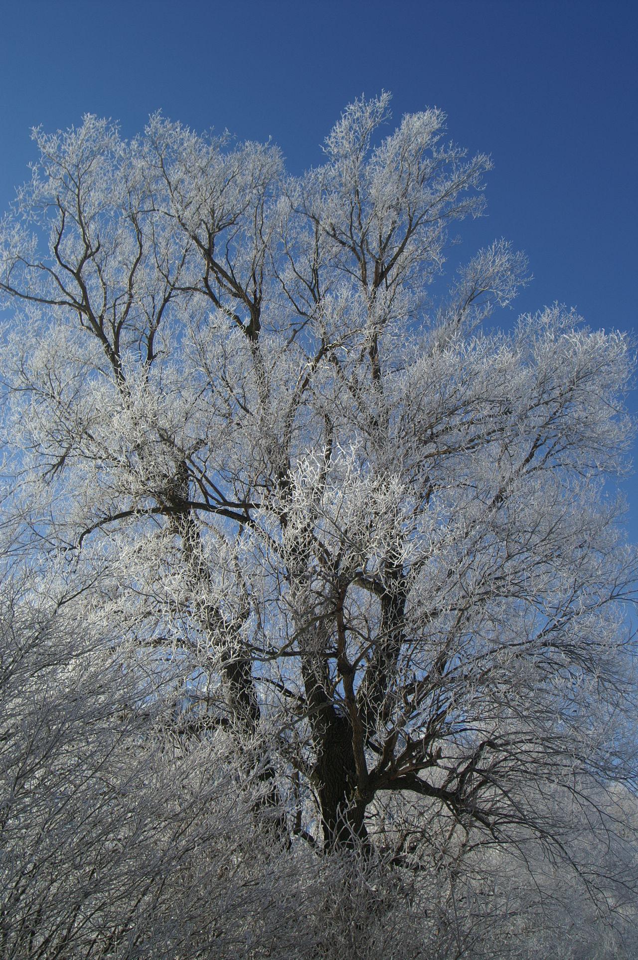 Schweiz Switzerland Wallis Leuk The Magic Mission Wintertime Winter Wonderland Nature Winter Trees Blue Sky Blauer Himmel Kalt Cold Cold Temperature