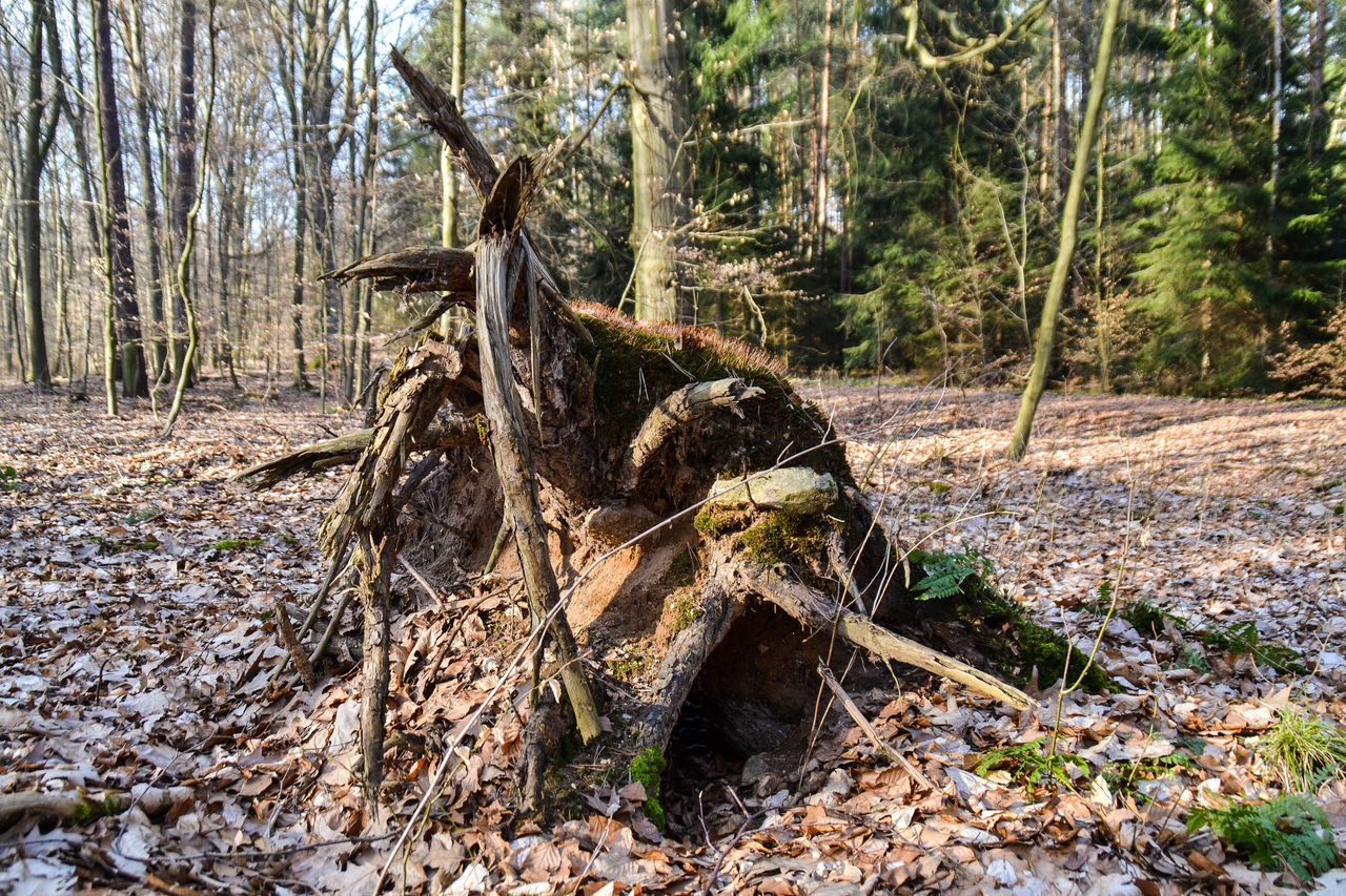 Beauty In Nature Branch Close-up Day Dead Tree Destruction Fallen Tree Forest Natural Disaster Nature No People Outdoors Scenics Tranquil Scene Tree Tree Trunk