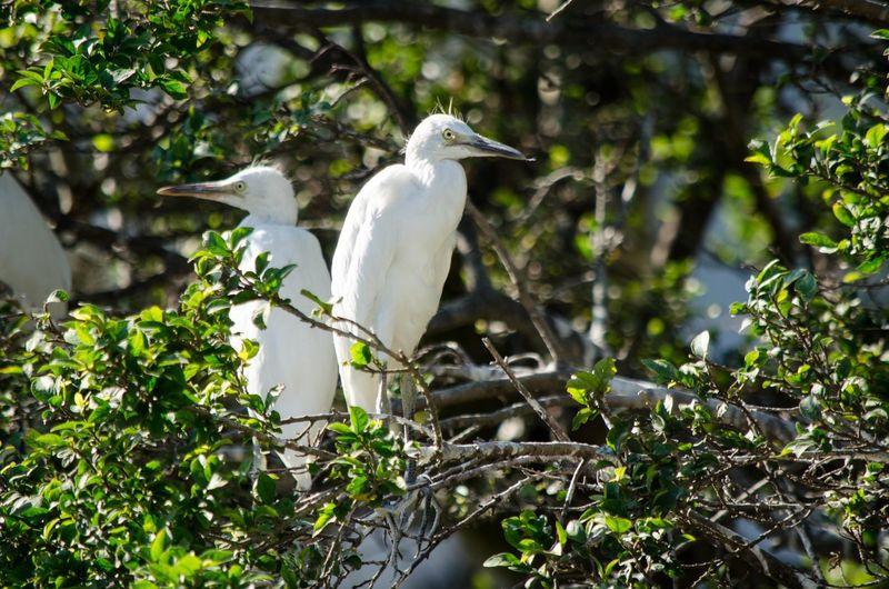 Cattle Egret Bird Photography Birds🐦⛅ Nature First Eyeem Photo EyeEm Gallery EyeEm Nature Lover Eye
