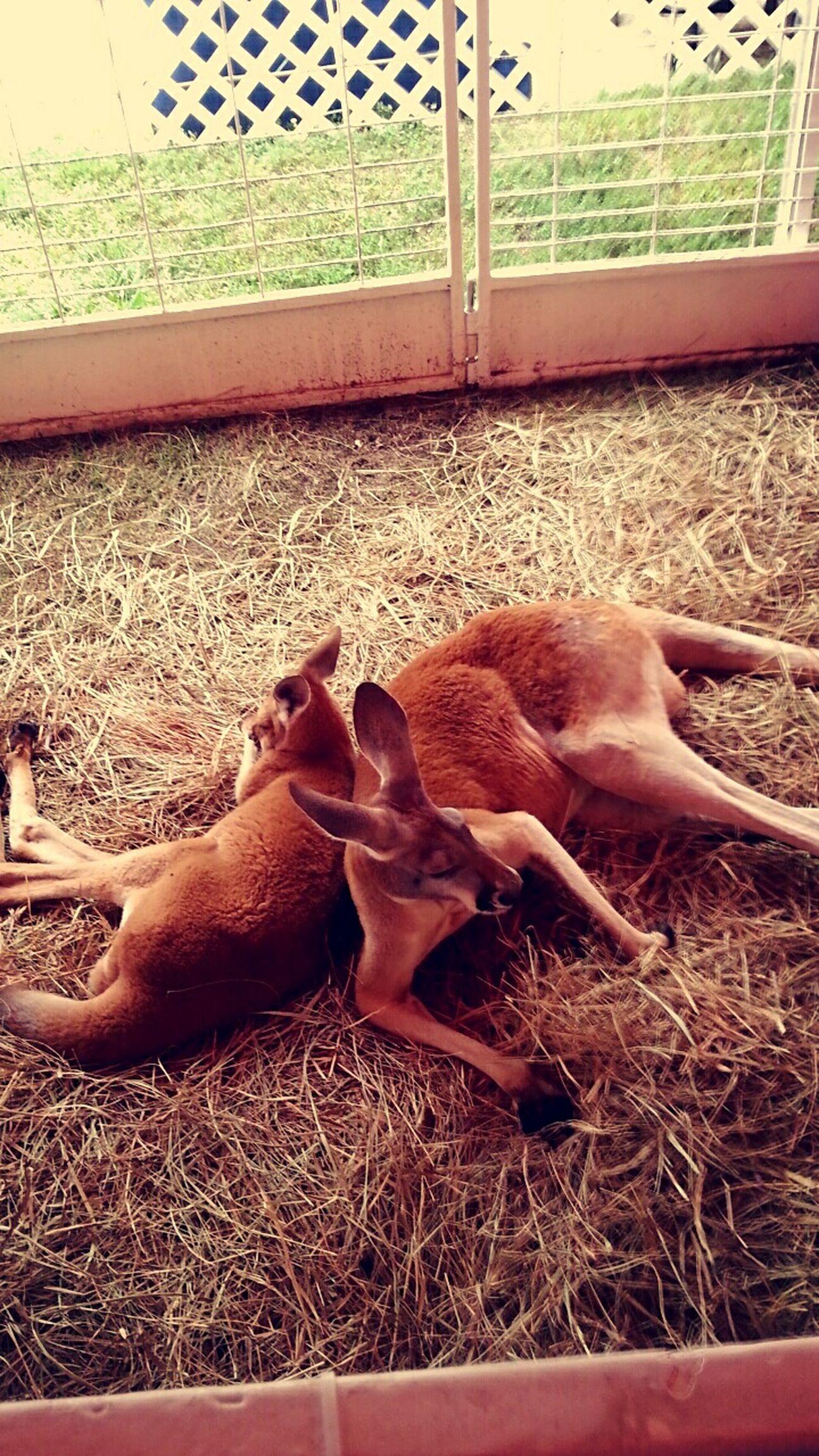 Animals Love ♥ Fair Time!