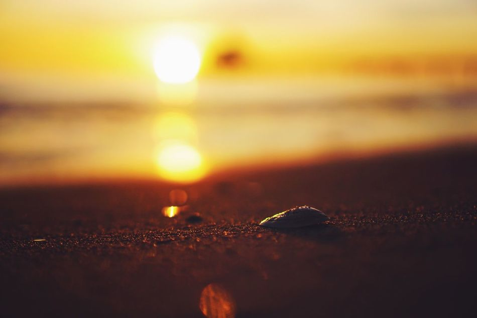 Close-up No People Water Selective Focus Sunset Nature Outdoors Sea Beauty In Nature Illuminated Beach Sky Sunrise Morning Light Beachphotography Bokeh Nature Nature_collection Landscape Seascape Baltic Sea Shell Beautiful Real Photography Focus On Foreground