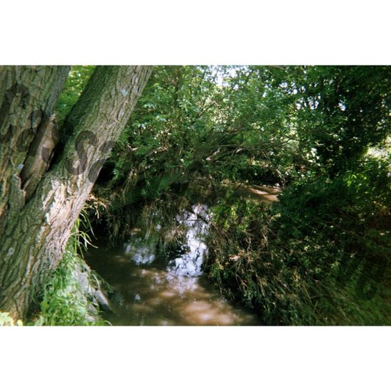Took this picture when I was in Iowa. ♥ Creek Iowa Green