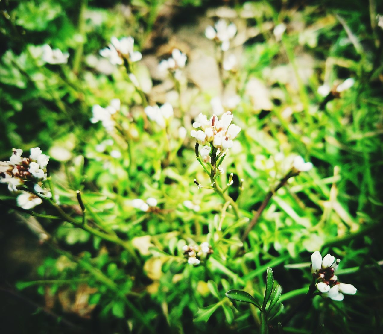 flower, nature, growth, beauty in nature, blossom, fragility, no people, petal, plant, outdoors, day, freshness, flower head, blooming, close-up, animal themes