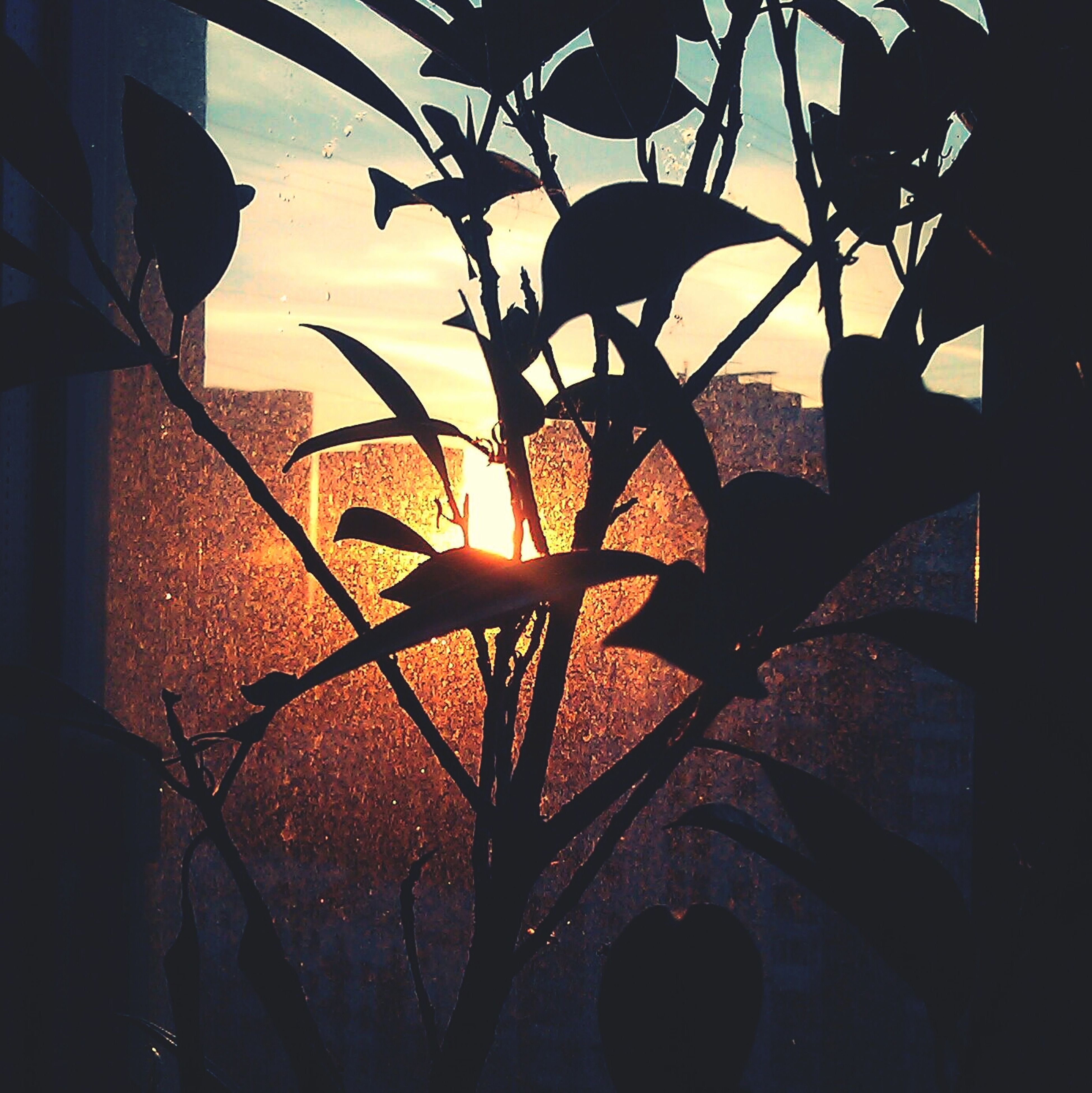 architecture, built structure, building exterior, sunset, sky, silhouette, low angle view, indoors, house, window, sunlight, plant, growth, branch, no people, building, residential structure, dusk, potted plant, wall - building feature