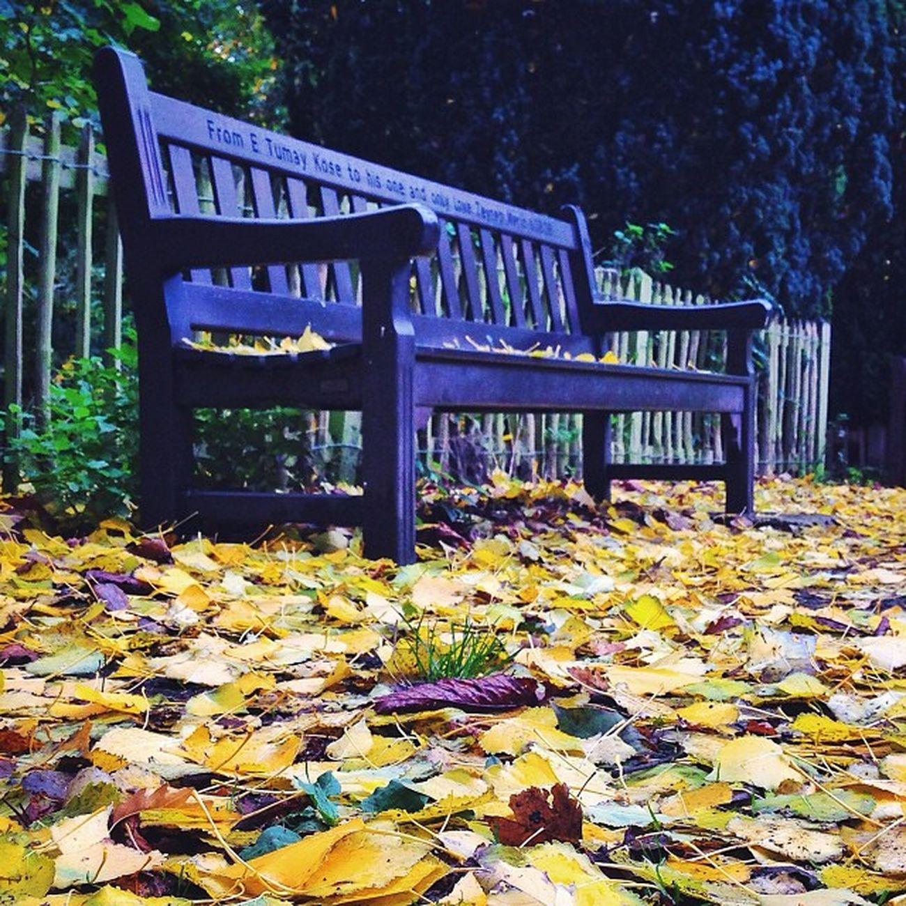 Autumn #bench from #holland #park ?????? #autumn #london Holland Autumn London Bench Park Claudialovesbenches Autumn_masters