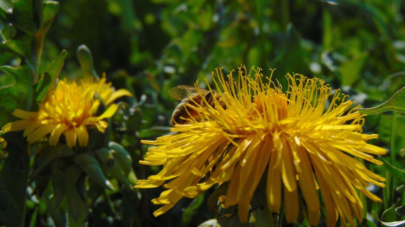 Animals EyeEm Nature Lover Spring Spring Into Spring Morning Nature Sun Hello World Flowers