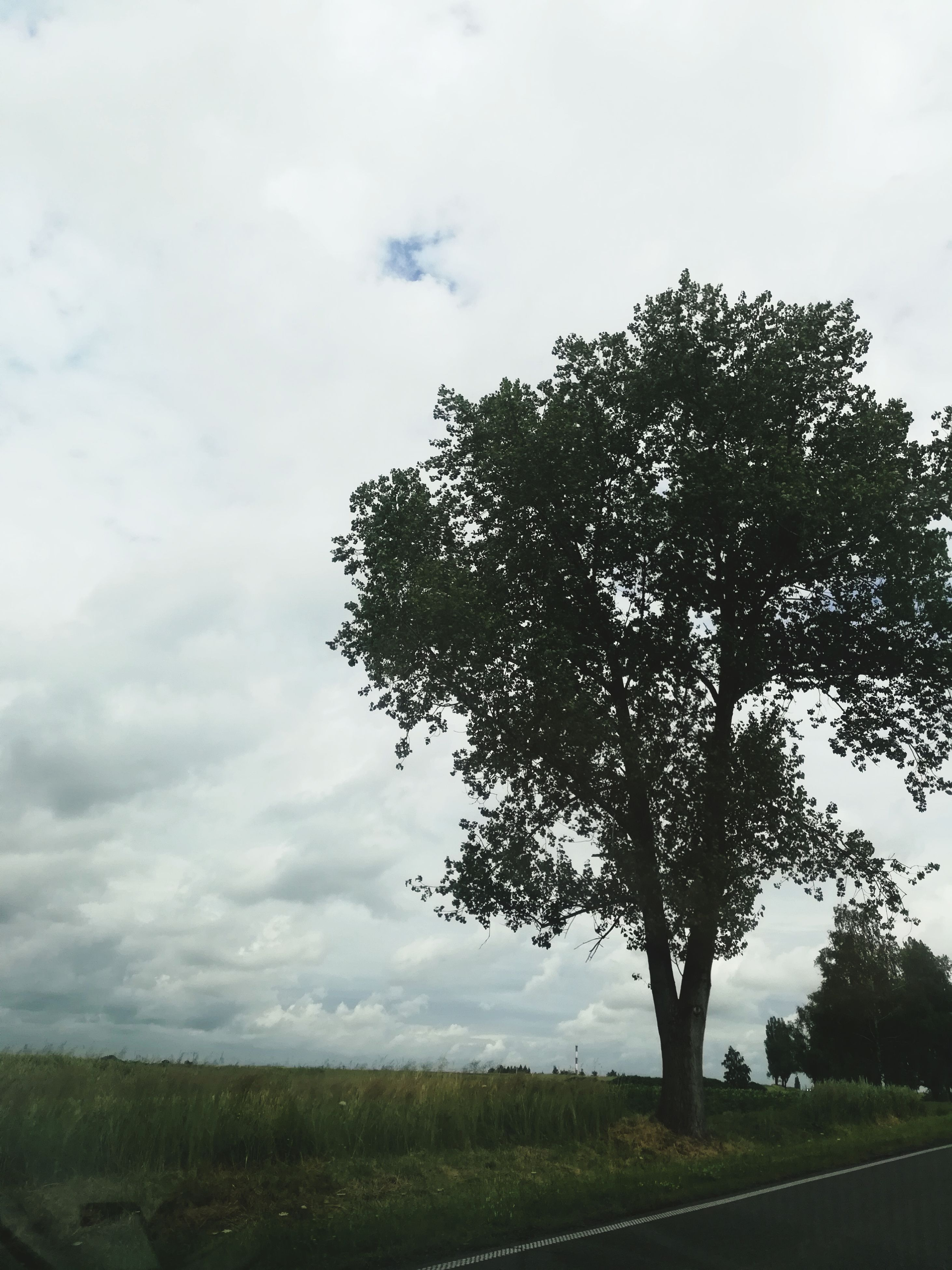 tree, sky, nature, cloud - sky, growth, landscape, tranquil scene, tranquility, scenics, beauty in nature, no people, day, outdoors, grass