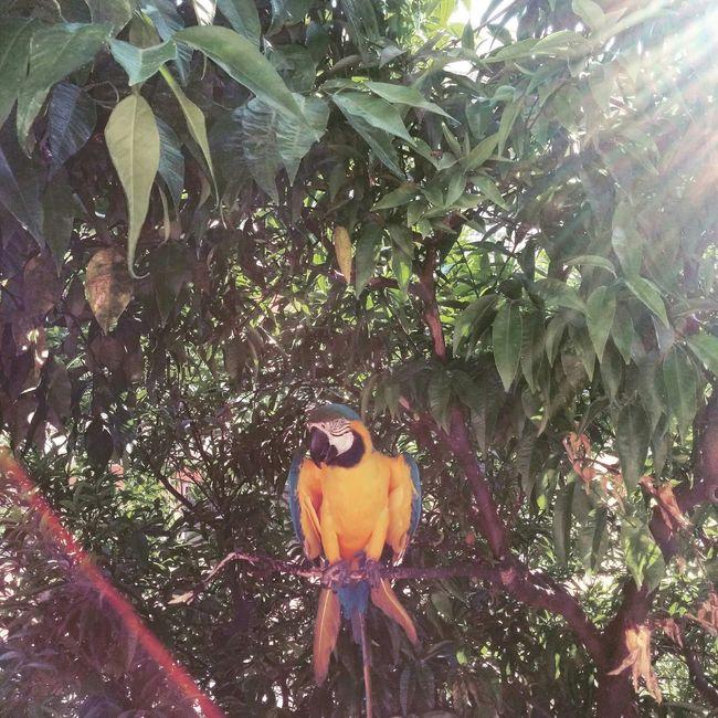 Ciro Pappagallo Eye4photography  Italy Ariannabaronephotography Parrot Tropical Tree Nature Holiday POV Summer2015