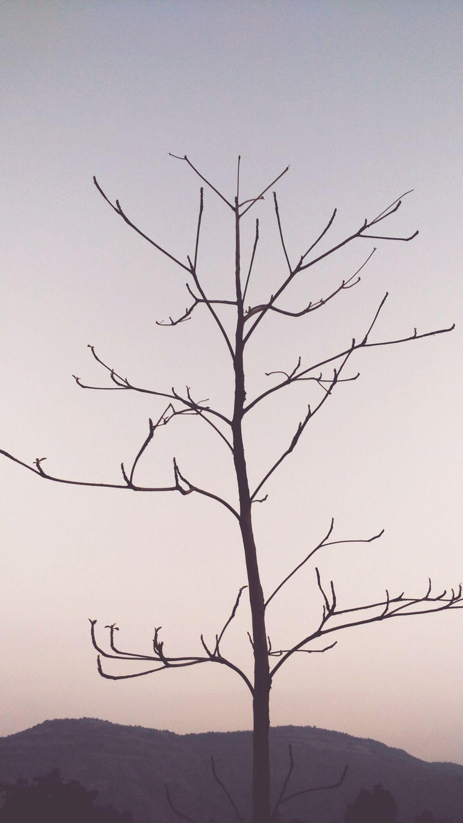 Tree Mobile Photography Mi4i Evening Pdphotography