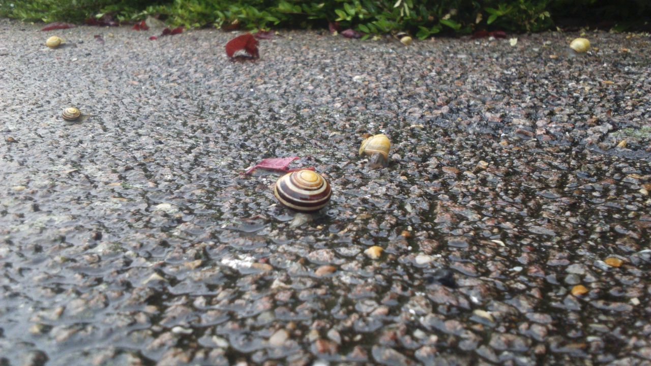 This one ends my snail daySnail Little Snail Snails Snail Shell Slimy Snails Slimy Nature On Your Doorstep Nature Photography Shell Nature_collection Nature Snail Collection Rainy Rain Wet Rainy Day Wet Day Near And Far Front And Back Swirly Path Gastropoda Wet Ground Mollusca Low Angle View