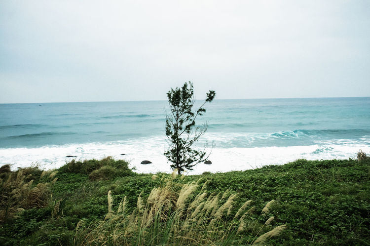 Sea Water Plant Grass Nature Beach Beauty In Nature Seascape Travel Natural Beautiful No People Outdoors Beauty In Nature Hualien, Taiwan Relaxing Taking Photos Hello World Hanging Out Check This Out Cheese! Country