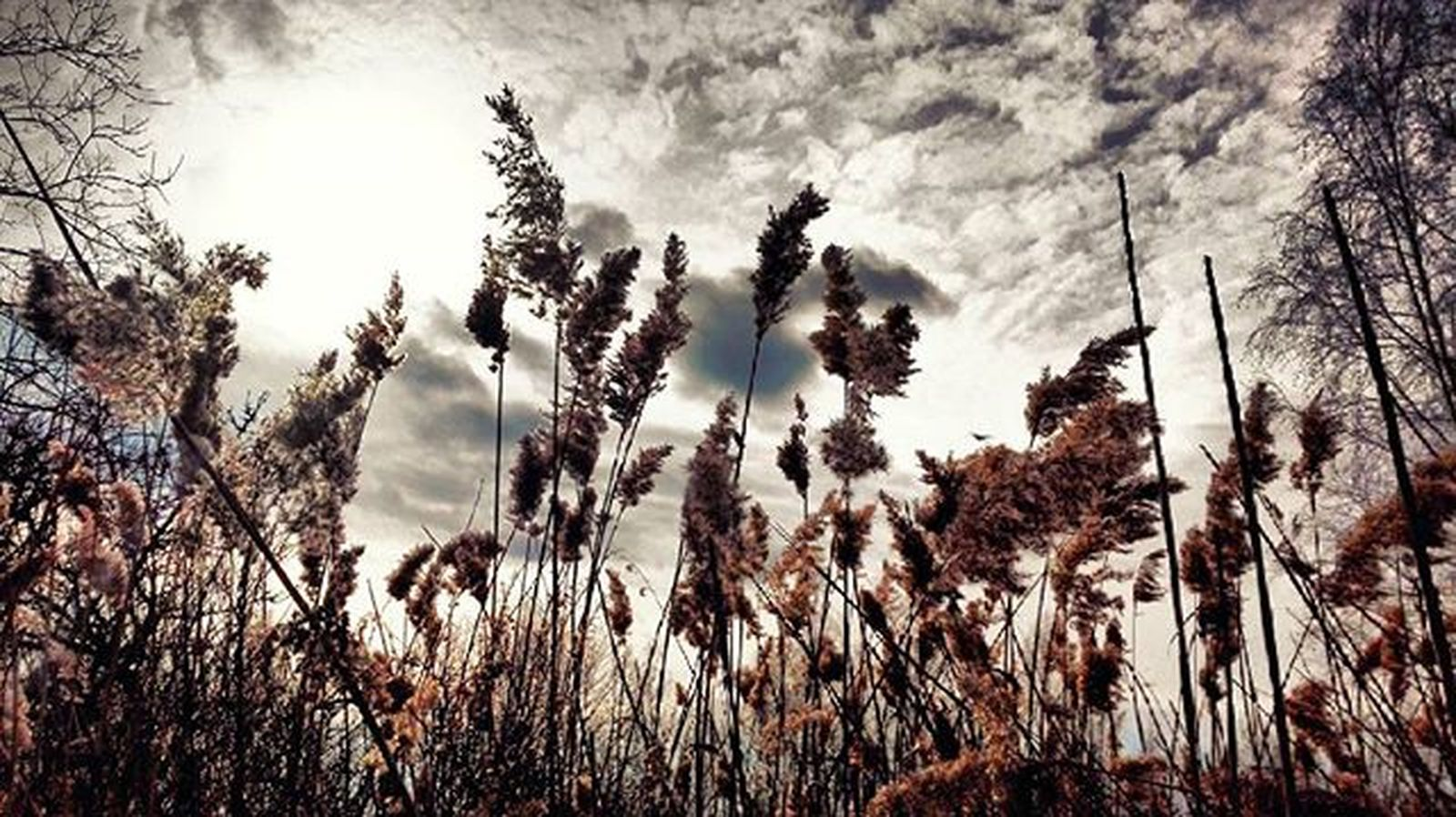 Morning walk with @reimartina :D (maybe not-so morning) Nature Grass Poaceae Sky Clouds Skyporn Sun Dramatic Photoshoot HDR Naturelover HuaweiP8Lite Huawei Photography Walk Morning Instapic Instadaily Photooftheday Follow Beautiful Detail Wanderlust Exploring