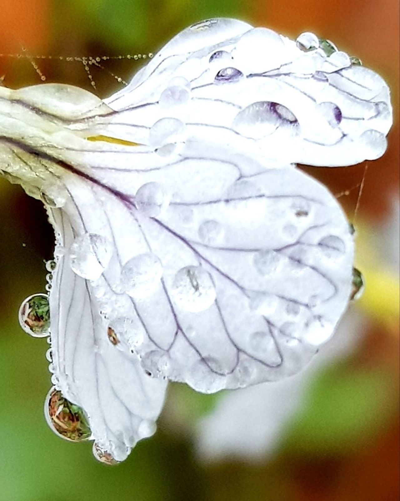 Day Automne Beauty In Nature Outdoors Nature Details Of Nature Natural Pearls Water Pearls Transparent Jewelry Water Plant Textured  Nature Photography Detail Photography Flowers, Nature And Beauty Refletction Reflet Pearl