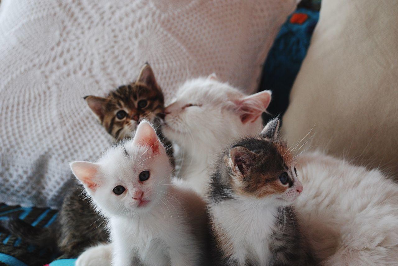 Beautiful stock photos of katzen, animal themes, domestic animals, pets, mammal