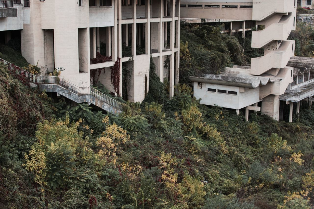 architecture, tree, building exterior, built structure, no people, abandoned, outdoors, growth, day, rubble, nature