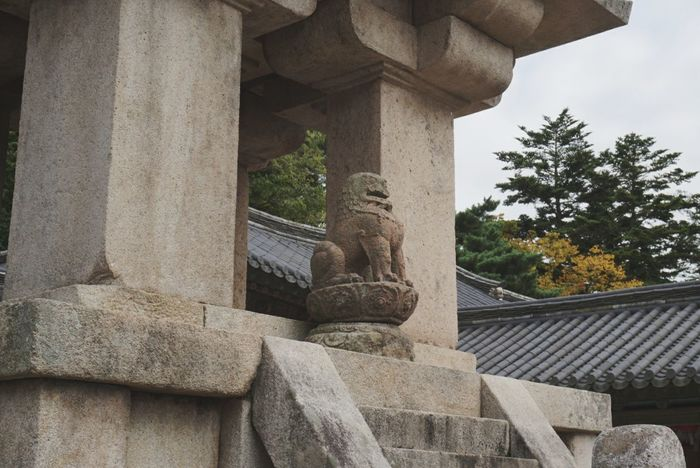 Only one tiger is left at the Bulguksa temple sadly when the japanese invade Korea they took 3 of the 4 existing ones Architecture Architectural Column Built Structure History Day Ancient No People Old Ruin Ancient Civilization Tree Outdoors Nature Sky Travel Photography Travel Exploring 대한민국 Korea Nature EyeEmNewHere 경주