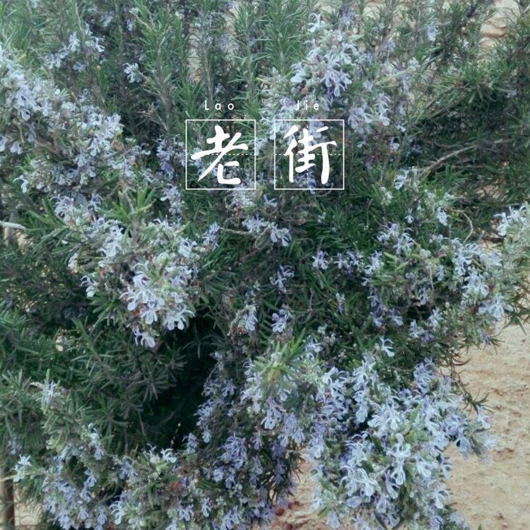 Tree Nature Day Little Littlesister FriendZone Purple Purple Flower Air Pure Nighty First Eyeem Photo
