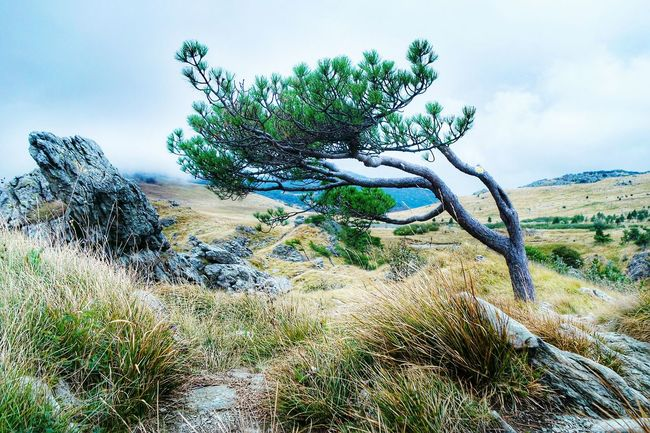 The struggle between the tree and the wind... Tree Tranquil Scene Tranquility Scenics Non-urban Scene Landscape Sky Nature Rock - Object Growth Branch Beauty In Nature Remote Solitude Day Plant Blue Countryside Outdoors Mountain EyeEm Best Shots Eye4photography  Fresh 3 Open Edit Nature_collection