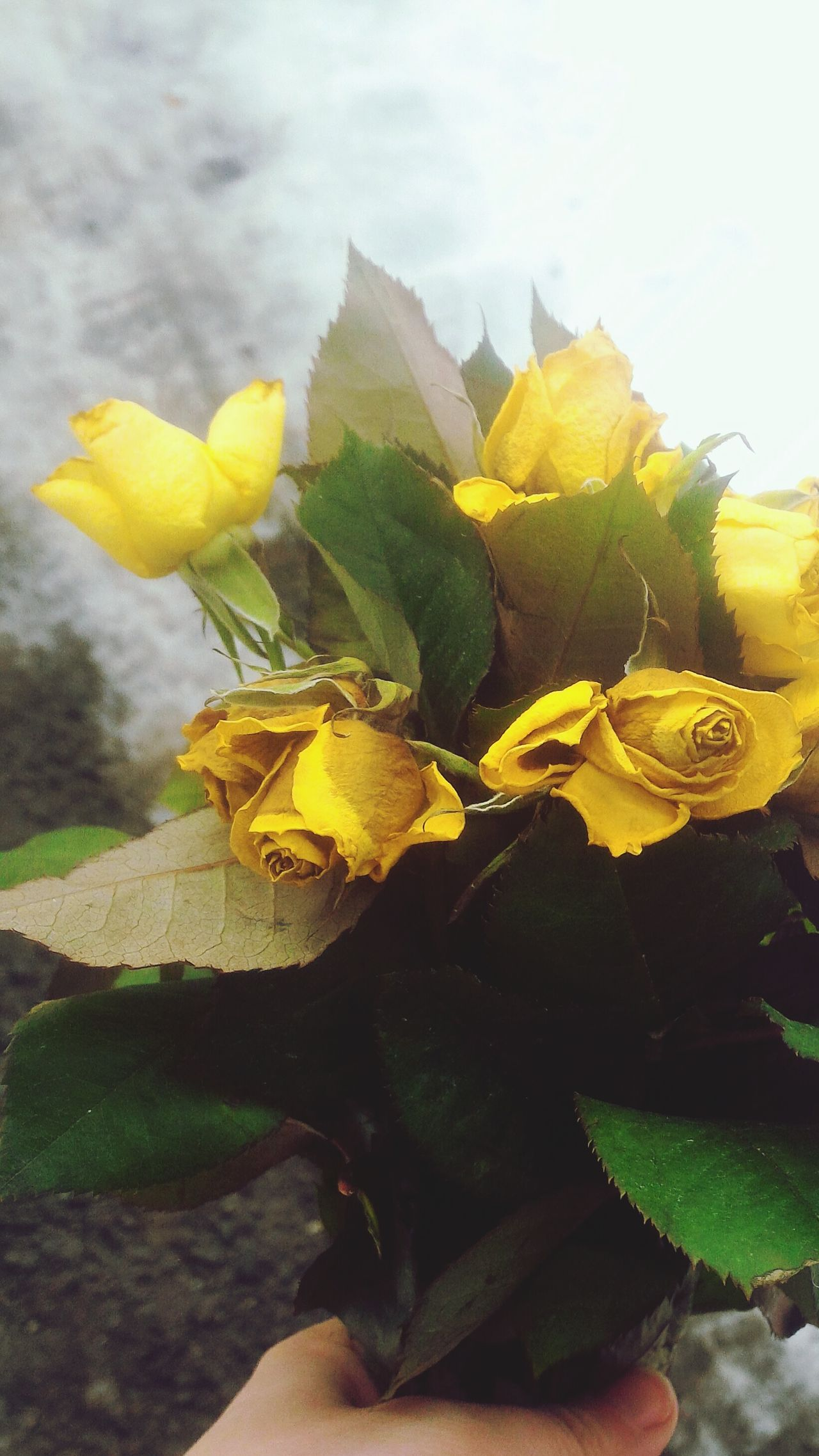 Goodbye flowers... Roses🌹 Yellow Roses Yellow Flowers Dead Flowers Snow And Flower Goodbye Everything Ends You Made Me Smile It Was Short But Beautiful