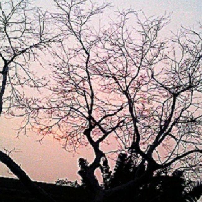 Streamzoofamily Macrolique Nature Thevilleatig fortheloveofblacknwhite ig_nature tree cloudporn