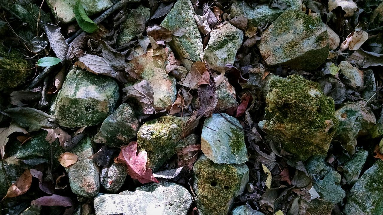 Rocks Leaves🌿 Nature Mounds Of Earth Simple Beauty Backgrounds Nature Textures Eyeem Nature Lover Nature Textures Moss Colors Of Nature Full Frame