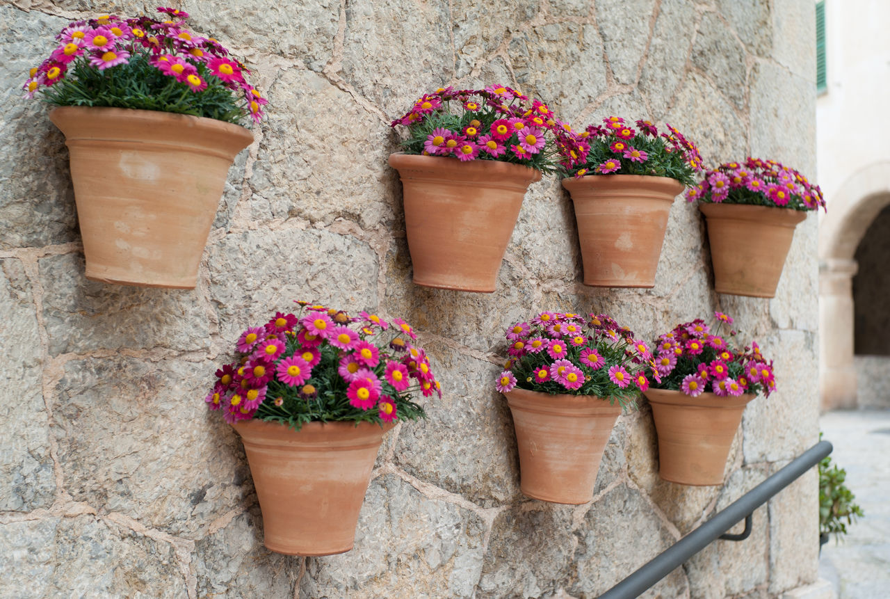 Flower pots at housewall in Valldemossa on Mallorca island Baleares Balearic Islands Flower Flower Pots Idyllic Idyllic Scenery Majorca Mallorca Mediterranean  Mediterranean Architecture Plant SPAIN Valldemossa Art Is Everywhere