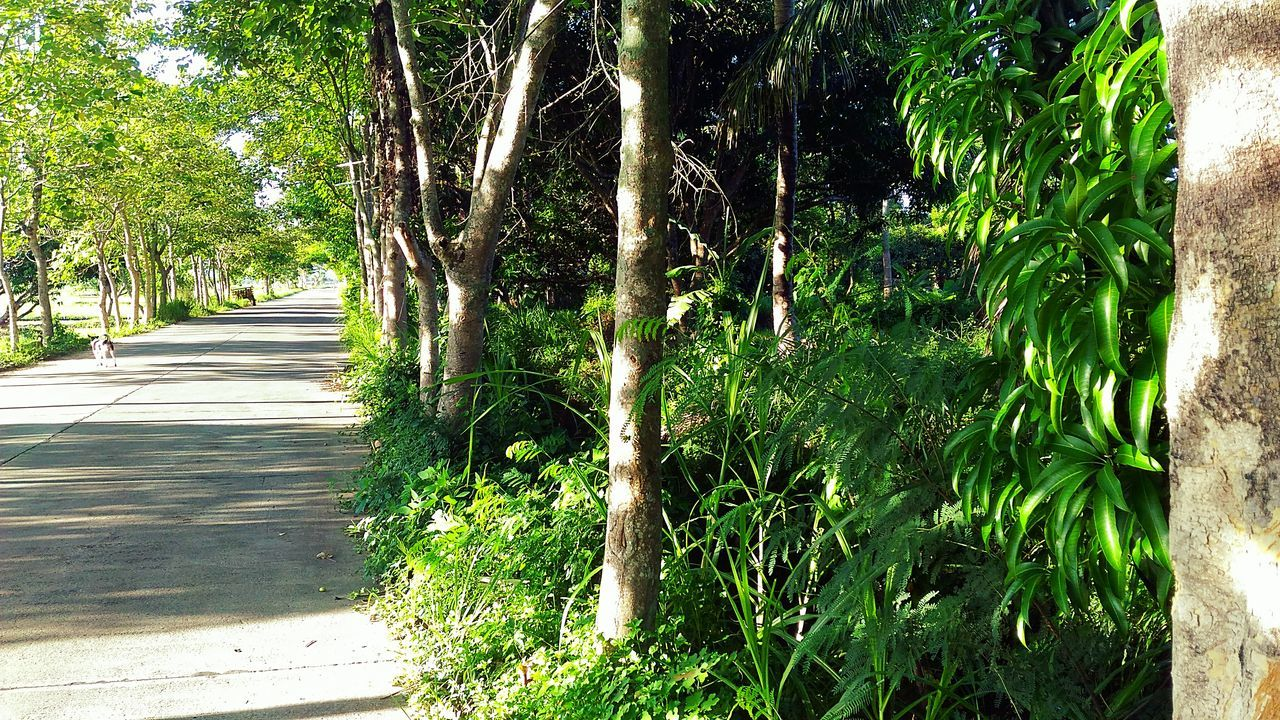 Walk The Path. EyeEm Asuszenfone2 Attemptsatphotography Rural Street Rural Morning Walk Rural Philippines