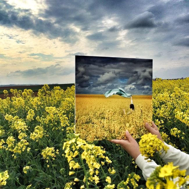 Flowers Yellow Landscape Pic