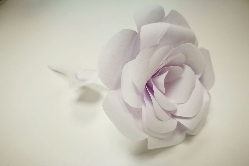 Paper Art Rose - Flower Single Flower Indoors  White Background Extreme Close-up No People