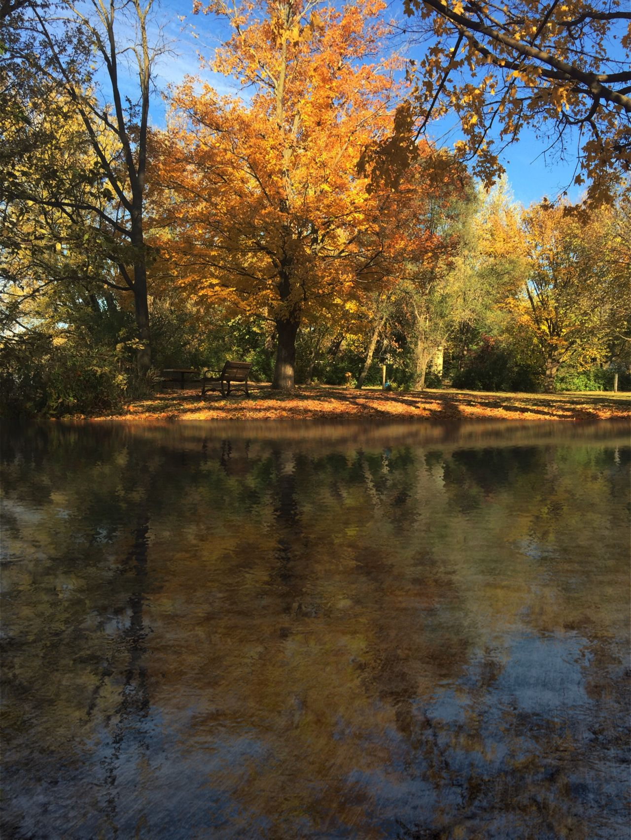 Waubonsie Creek, Oswego, Illinois Autumn🍁🍁🍁 Autumn Leaves Autumn Collection Autumn Autumn Days Fall Beauty Fall Collection Fall Colors Landscape Landscape_Collection Landscape_photography Creek Water River The Week Of Eyeem The Week On EyeEem Exceptional Photographs Oswego, IL The Secret Spaces The Great Outdoors