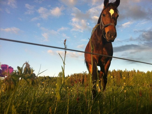 There's something special about summer evenings Love Horse Horses Sweet Little Horses