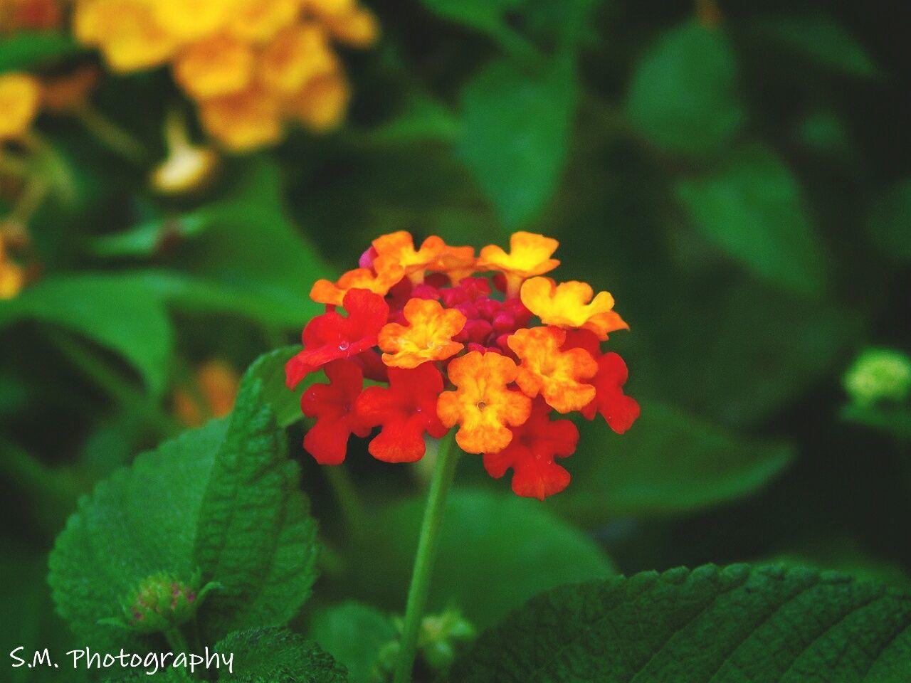 colour blast Flowers_collection