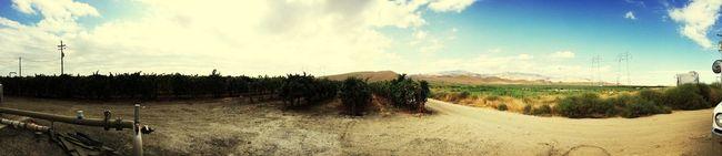 Mountains Grapes! Tumbleweed
