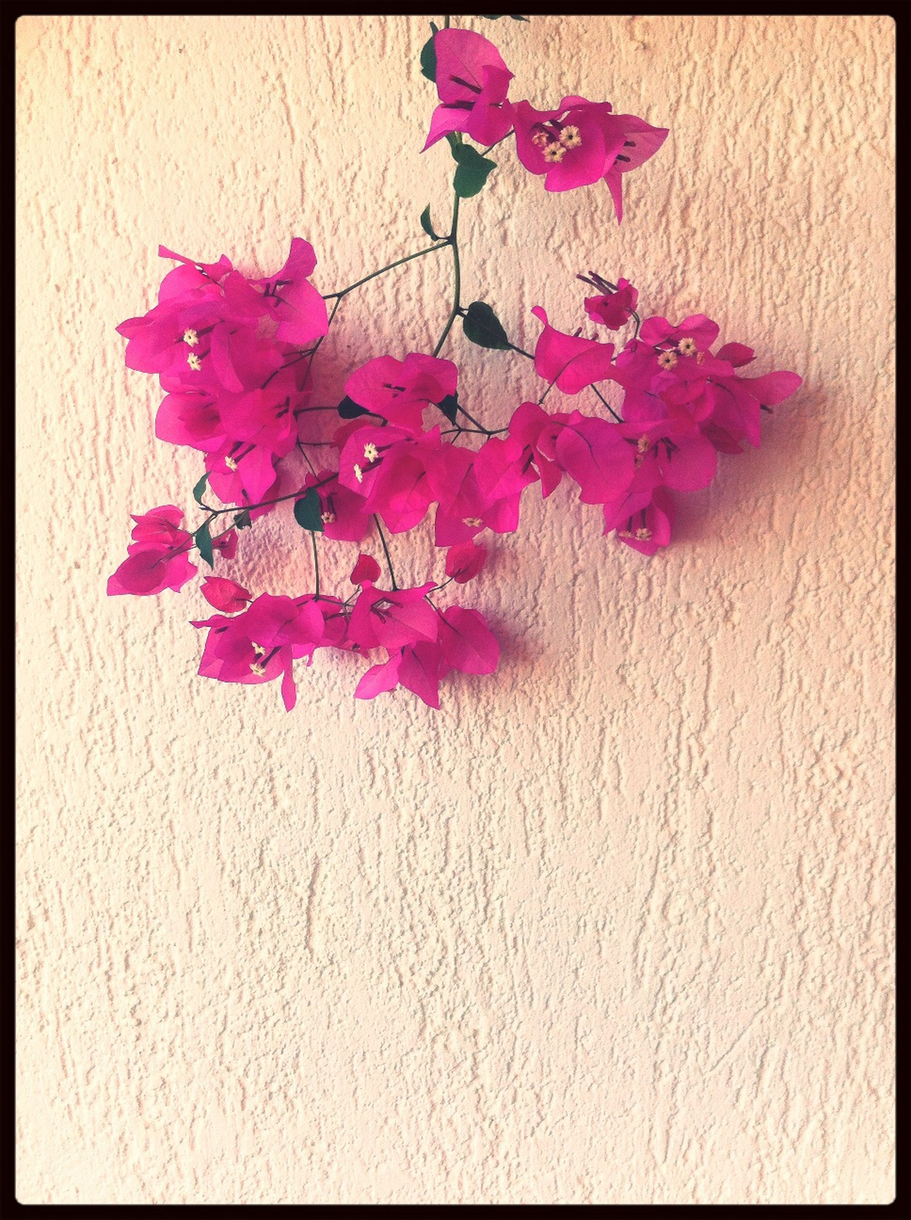 flower, indoors, pink color, freshness, petal, fragility, transfer print, high angle view, still life, auto post production filter, red, multi colored, wall - building feature, table, close-up, decoration, pink, no people, variation, wood - material