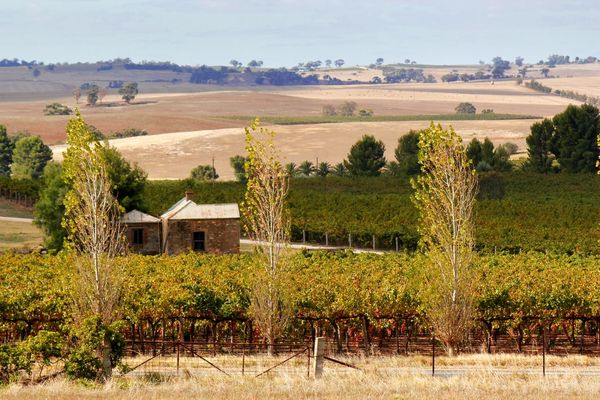 Sunburnt open country in the Barossa Valley South Australia Agriculture Architecture Barn Barossa Valley Beauty In Nature Building Exterior Built Structure Day Farm Farmhouse Farmland Field Grass House Landscape Nature No People Outdoors Rural Scene Scenics Sky Summer Tranquil Scene Tree Vineyard