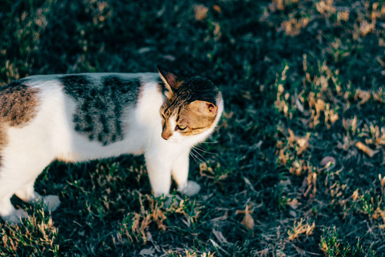 Animal Animal Themes Cat Cat Lovers Cats Cats Of EyeEm Cat♡ Day Domestic Animals Domestic Cat EyeEm EyeEm Best Shots Grass Looking At Camera Mammal Nature No People One Animal Outdoors Pet Pet Photography  Pets Portrait Stare Sunny