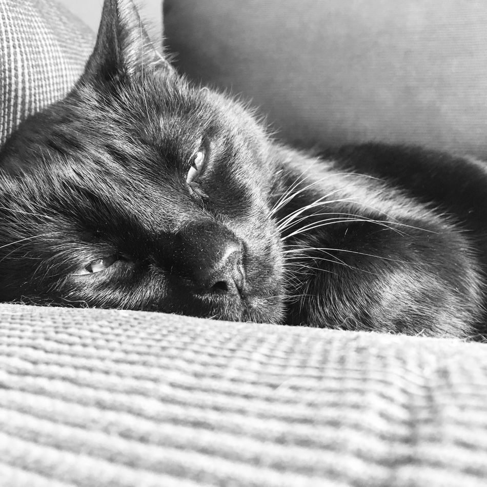 Just chillin' Pets Domestic Cat Sleeping Feline Selective Focus Blackandwhite Monochrome Blackandwhite Photography Portrait BLackCat Relaxation Close-up Feline Eyes Mycat Beautiful Animals