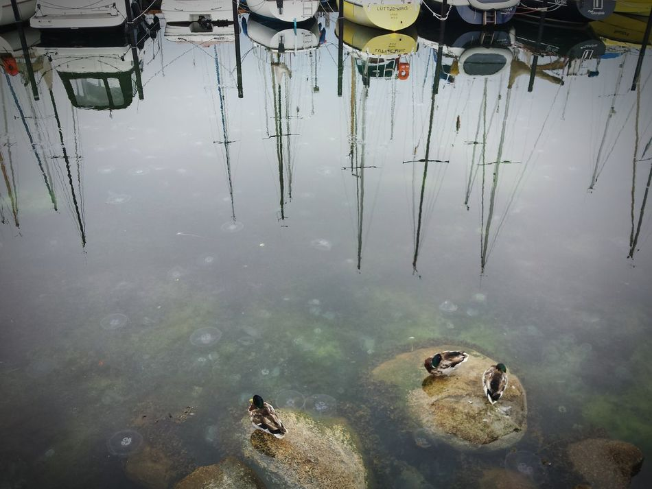 Water Reflection Nature Outdoors Enten Quallen Eckernförde Ships Boote Rainy Meer Ostsee Baltic Sea Yellyfish Ducks Stone Hafen Habour EyeEmNewHere Adapted To The City