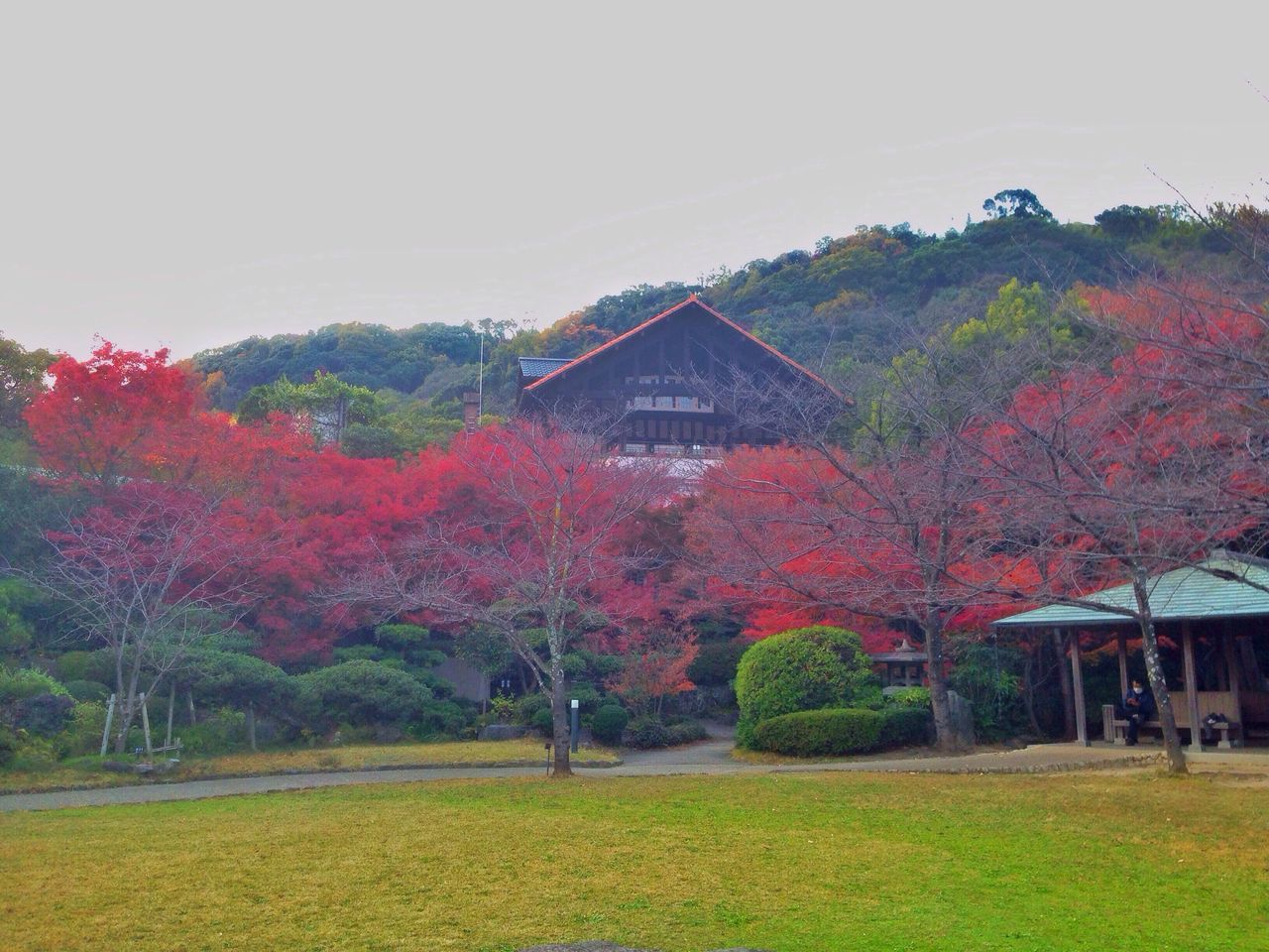 Autumn Colors Autumn Leaves Fall Beauty Fall Colors Colorful Garden Museum Kyoto Japan Japan Photography