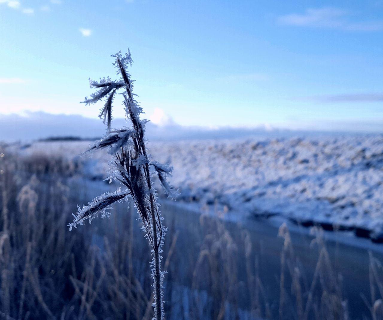 Winter Wintertime Winter Wonderland Winterwonderland Snow Snow ❄ Schnee Nordfriesland Eiderstedt