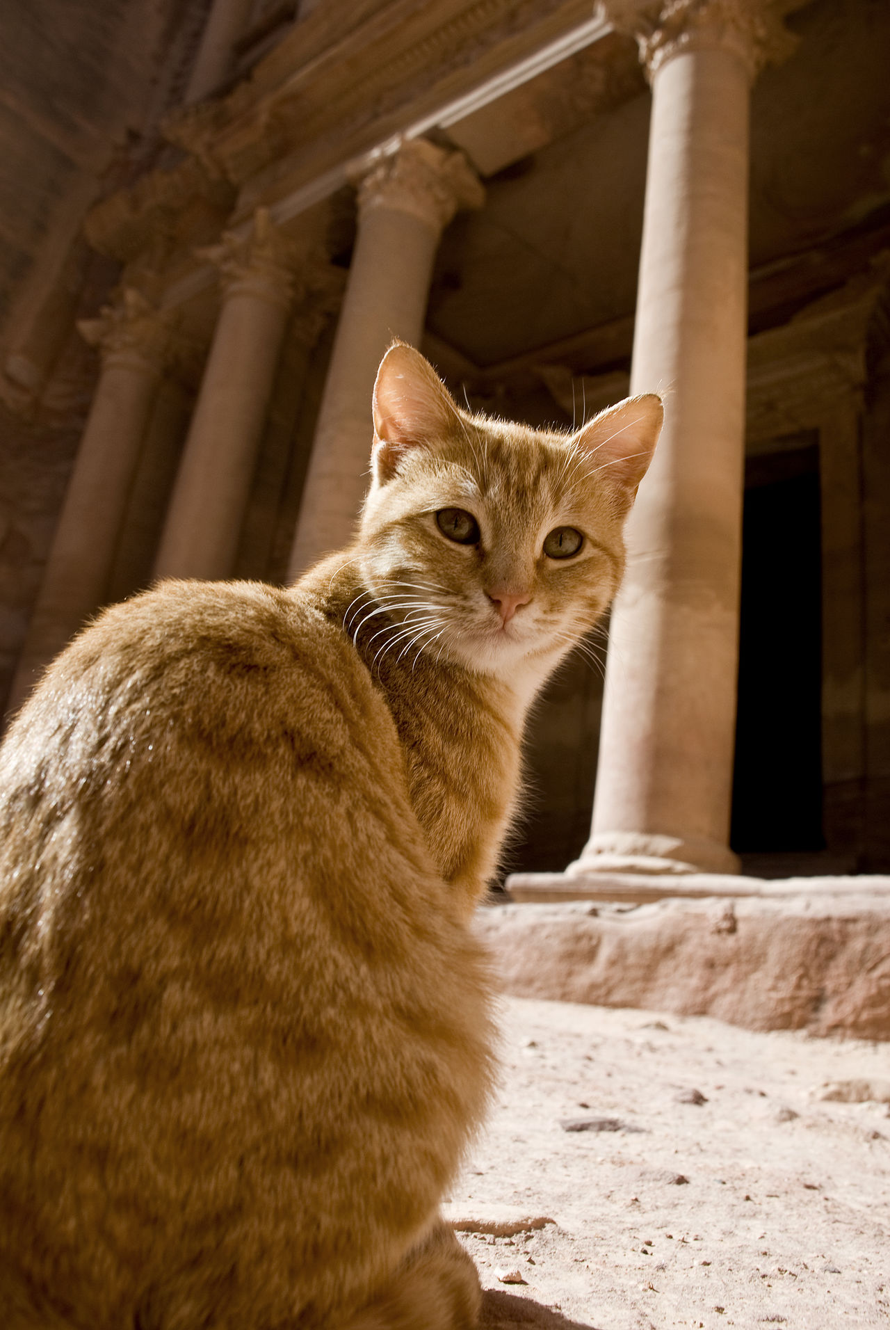 Cat in Front of the Treasure House in Petra, Jordan Animal Themes Day Landmarks Sacred Places Temple Architecture Tourism Famous Landmarks Domestic Animals Domestic Cat Feline Mammal No People Outdoors Pets Temple - Building Architecture Holy Islamic Architecture EyeEm New Here