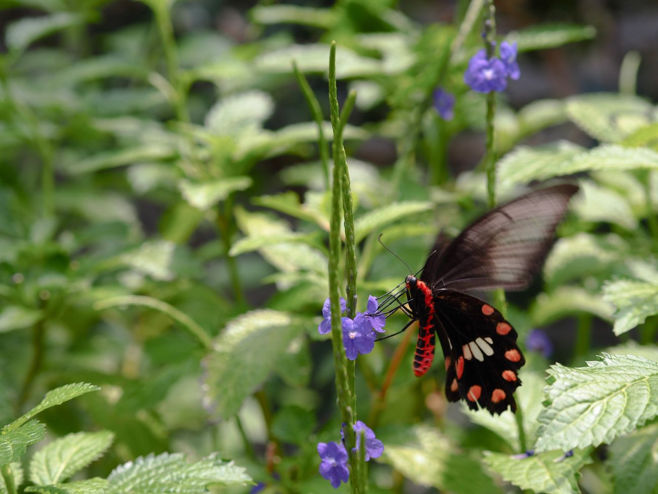 そういえば、まだ勉強始めてないな… Butterfly Butterfly - Insect Insect Flower Plant Fragility Animal Themes One Animal No People Freshness Flower Head Close-up Day Olympus OM-D E-M5 Mk.II