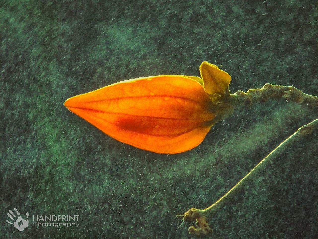 petal, flower, beauty in nature, fragility, no people, close-up, nature, flower head, growth, freshness, day, leaf, outdoors
