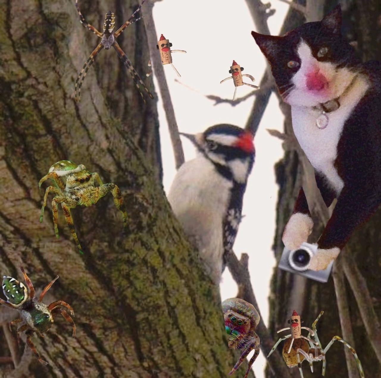 Beautiful stock photos of spinnen, Animal, Animal Themes, Animal Wildlife, Animals In The Wild
