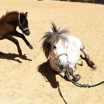 Mom and baby 😄 Pony Horse Little Horse Babyhorse Summer Summertime Horses Baby Mom