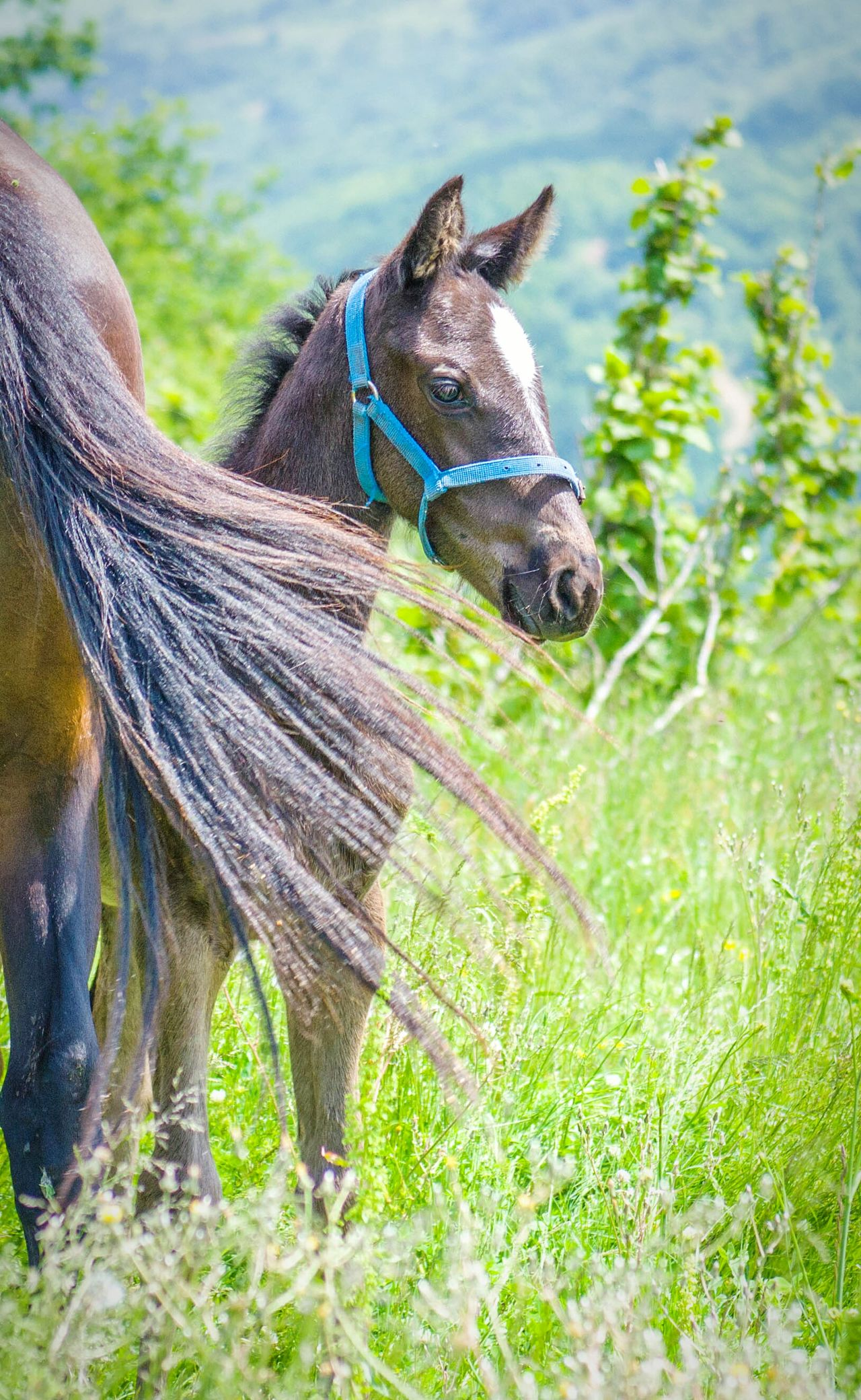 Mini Horse Horses Horse Photography  Green World Nature Nature Photography Animal Animal Photography First Eyeem Photo